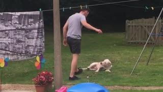 Was Going to Punch the Dog for Not Lifting the Ball
