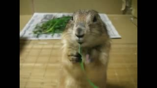Gopher gopher nibbles weed