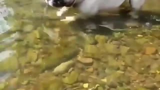 my dog parks around at the river