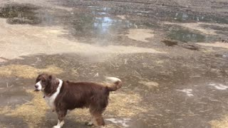 Dog Walks into Unexpected Whirlwind - Video