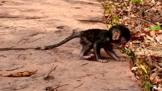 Cute baby monkey learning to walking the first time