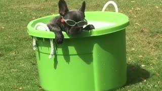 Coolest dog ever chills out in his personal puppy pool