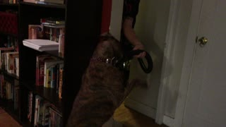 Dog vs. Vacuum - Video