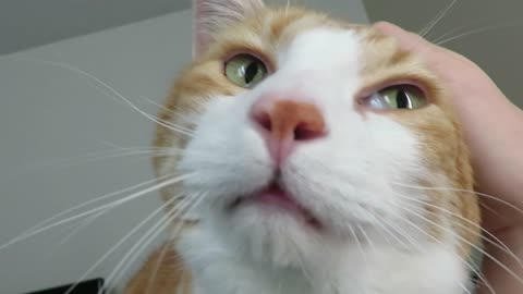 Cat meows to wake up owner