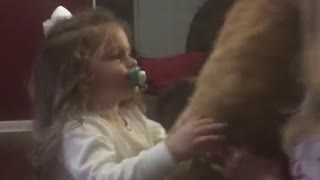 Little girl falls over trying to hold big cat