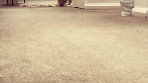 Burgess the Bunny Goes For a Hop
