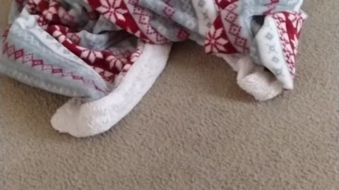 Who's under the blanket
