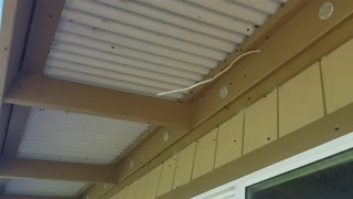 Thousands of flies Swarming house  - Video