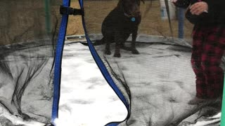 Dog on an Icy Trampoline - Video