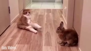 A cat Next To A Rabbit.