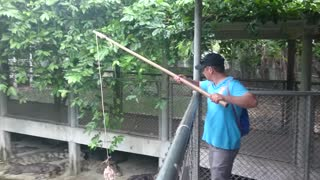how to catch a crocodile on a fishing rod