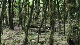 Unusual forest with birdsong