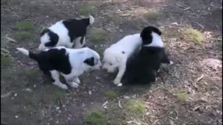 cute puppies playing together