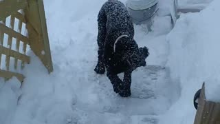 Adorable playtime with the dog in snow