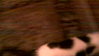 My Cat Love Honey Candy - Video
