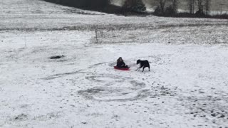 Dog Does Donuts with Kiddo