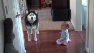 Husky Imitates Little Baby's Babbling - Video