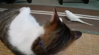 Little Bird Kisses His Cat Friend !