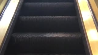 Little poofy grey dog rides on a escalator - Video