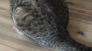 Cat Has a Strange Reaction to Its Own Fur