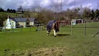 Horse Going CRAZY In Field - Video
