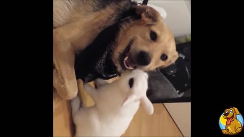 Dog and rabbit share incredible friendship