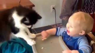 Very funny cat compilation