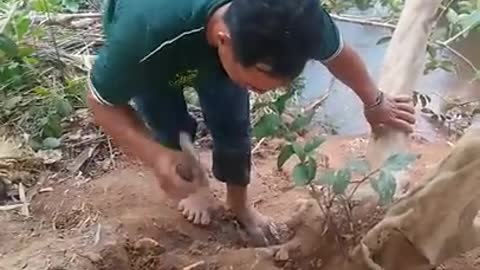 Bonsai master cut for being natural tree