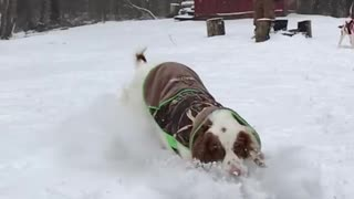 Green ball thrown at dog in snow - Video