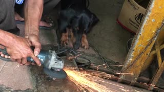 Dog Doesn't like Sparks - Video
