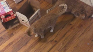 Blind Cat Gets Paid - Video