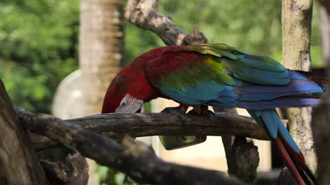 Macaw parrot on a branch