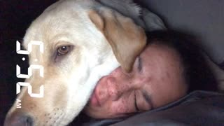 Puppy alarm clock wakes owner up super early