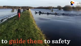 Herd Of Horses Saved From A Serious Life Threat - Video