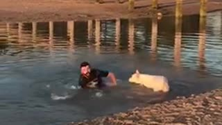 Guy white dog trips him and he falls in the water