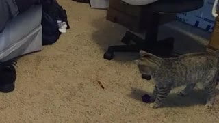 Cat has total meltdown over piece of candy