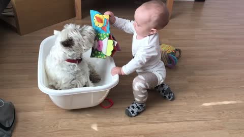 Westie and baby enjoy playtime with each other