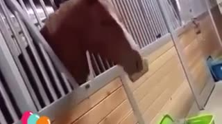 The best funny animal clips