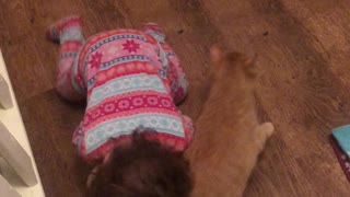 Affectionate Kitty Plays with Toddler Best Friend