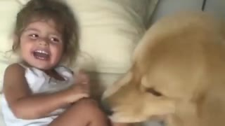 Strong scene of a dog attack and baby laughs