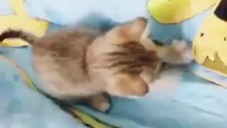 Choose today is your birthday beloved cat! - Video