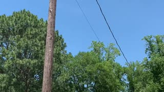 Squirrel Relaxes While Hanging From Power Line