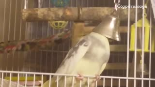 Bird chirping with head inside of bell - Video