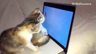 Two cats playing with goldfish on laptop - Video