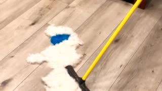 Blue Eared Dog Gets Brushed Away