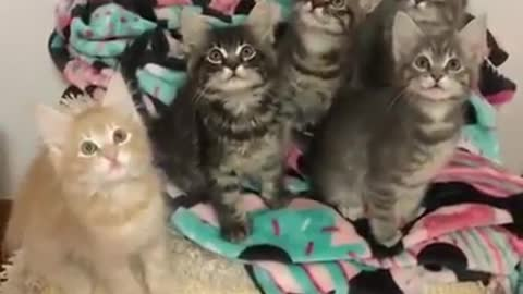 We are cutest kitten - you must have one kitten in your home