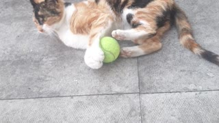 My Gorgeous Ginger Cat Loves Playing with Cricket Ball
