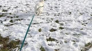 The happiest dog in the snow - Video