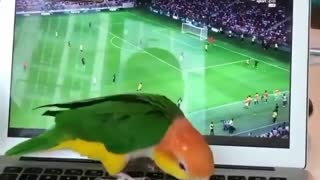 Birdy likes to watch football match with me - Video