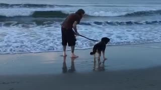 Dog backing away from wave on beach - Video